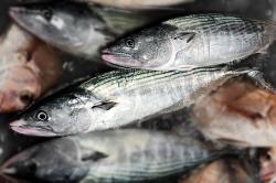 魚180717