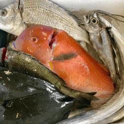 魚と畑1807182-min