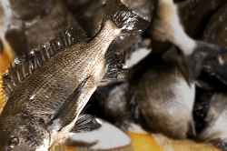 魚180719-min