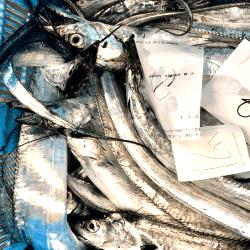 魚と畑180723-min
