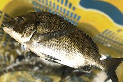 魚180726-min
