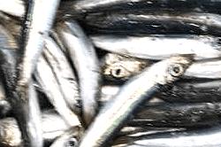 魚180803-min