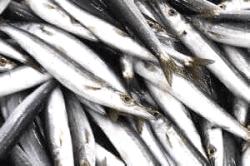 魚180821-min
