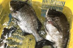 魚180823-min