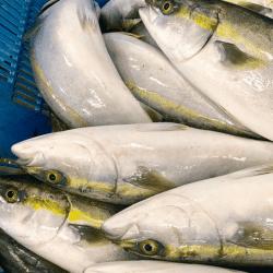 魚と畑180913-min