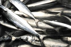 魚180919-min