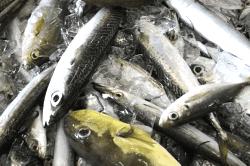 魚180926-min