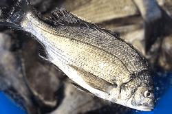 魚181005-min