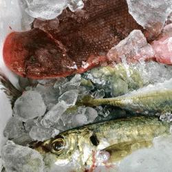 魚と畑181006-min