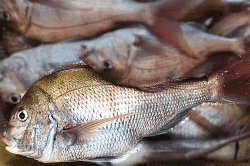 魚181009-min