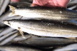 魚181018-min (1)
