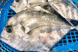 魚と畑181019-min (1)