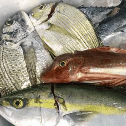 魚と畑181023-min