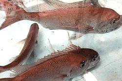 魚181026-min