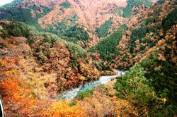 井川1811061-min