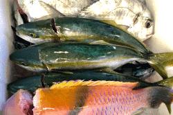 魚と畑181112-min