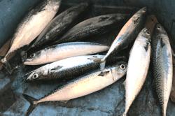 魚181121-min