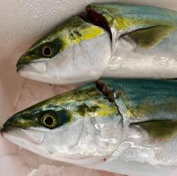 魚と畑181128-min