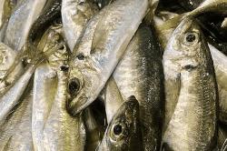 魚畑181207-min