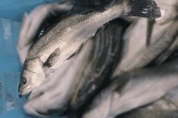 魚181211-min