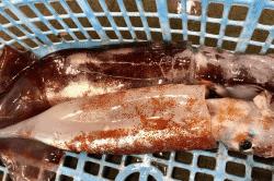 魚と畑181220-min (1)