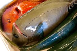 魚絞め-min