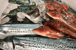 魚と畑190122-min