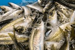 魚と畑190119-min