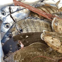 魚と畑190207-min