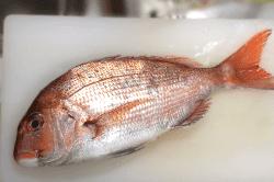真鯛の捌き方1-min