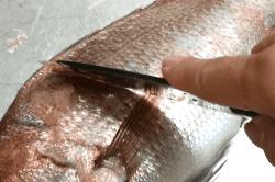 真鯛の捌き方5-min
