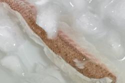 真鯛の捌き方14-min