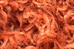 魚桜えび190513-min