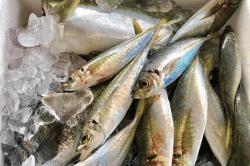 魚と畑190513-min