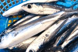 魚と畑190515-min