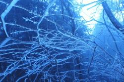 井川の祖氷-min