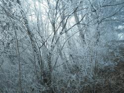 井川の祖氷2-min