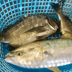 魚と畑190905-min