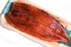 中国産ヨーロッパ種鰻-min