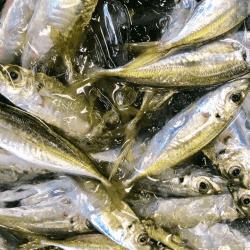 魚と畑190912-min