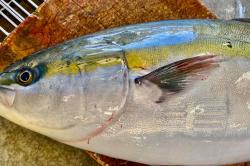 魚20410