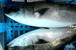魚201703171-min
