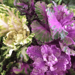 野菜1703222-min