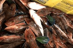 魚1704054-min