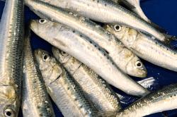 魚1704063-min