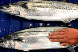 魚1704071-min