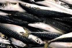 魚1704131-min