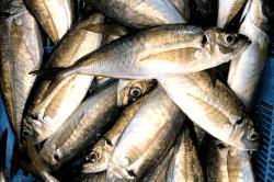 魚1704146-min